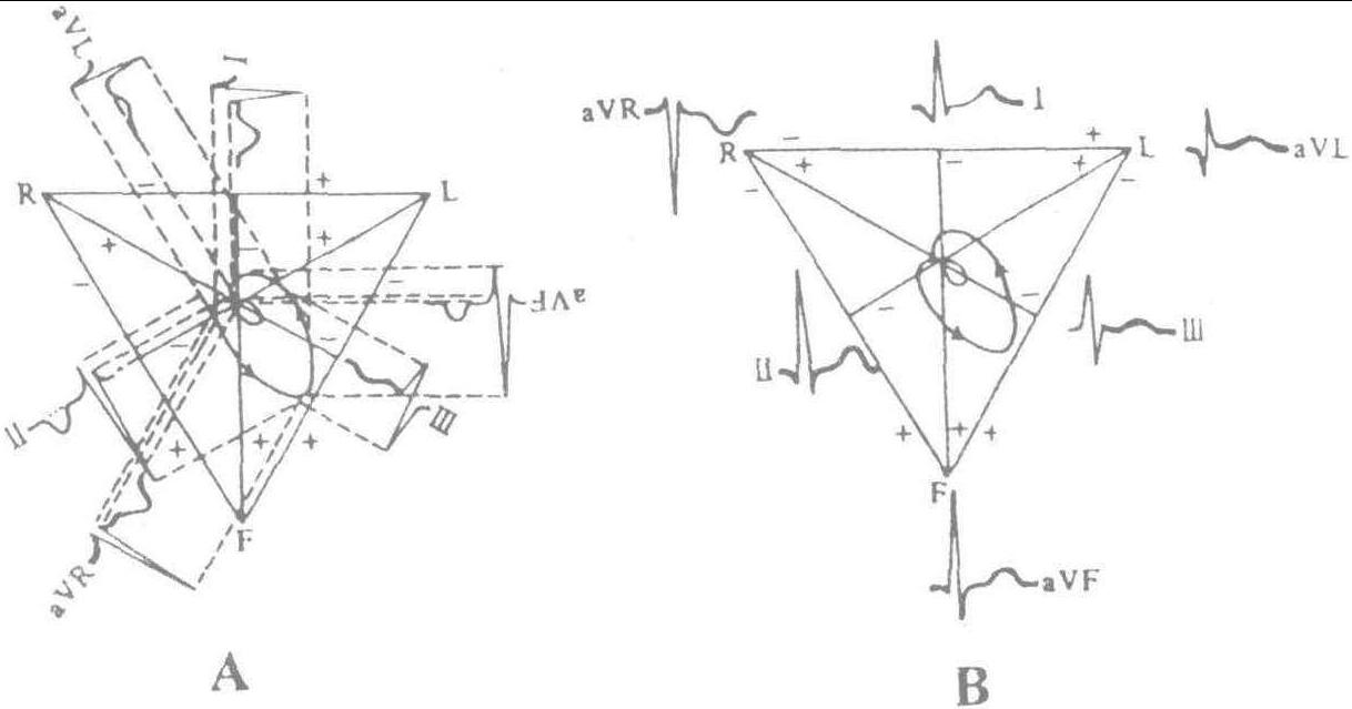 图1-29 额面心向量环在肢体导联轴上的投影及心电图波形
